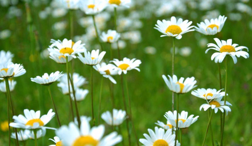 16 nov. Bourse aux plantes, palmarès concours fleurissement